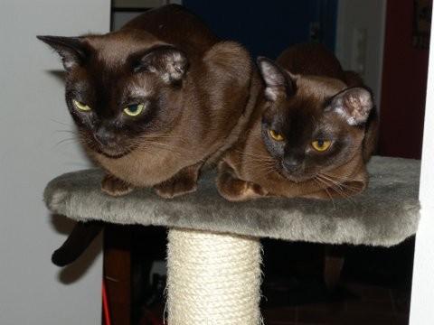 kattungar skåne 2016